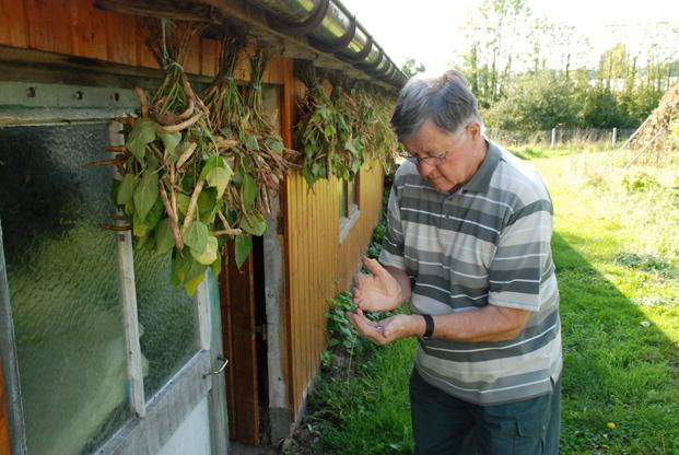 Claude Mesnil récolte le coco de Pont-Audemer