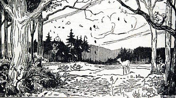 Forêt chevreuil